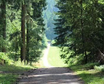 Wanderwege im Schwarzwald direkt hinter dem Seminarhaus